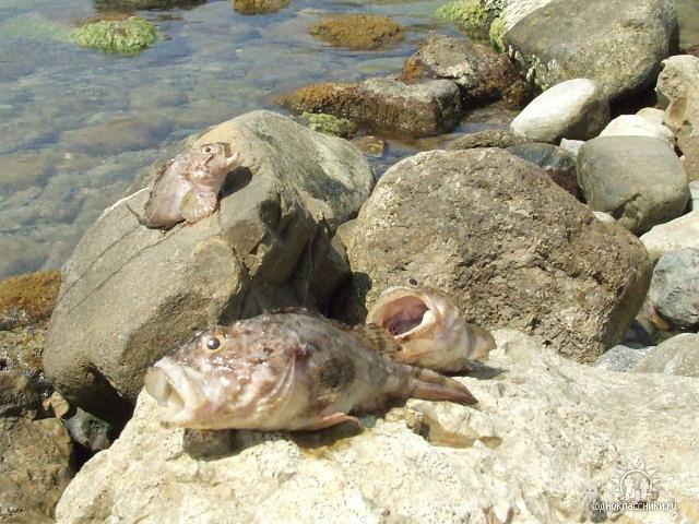 Рыбалка в Орджоникидзе, Крым.