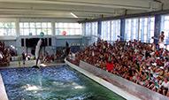 Дельфинарий в Курортном