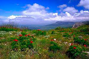 Весна в Орджоникидзе - Крым.