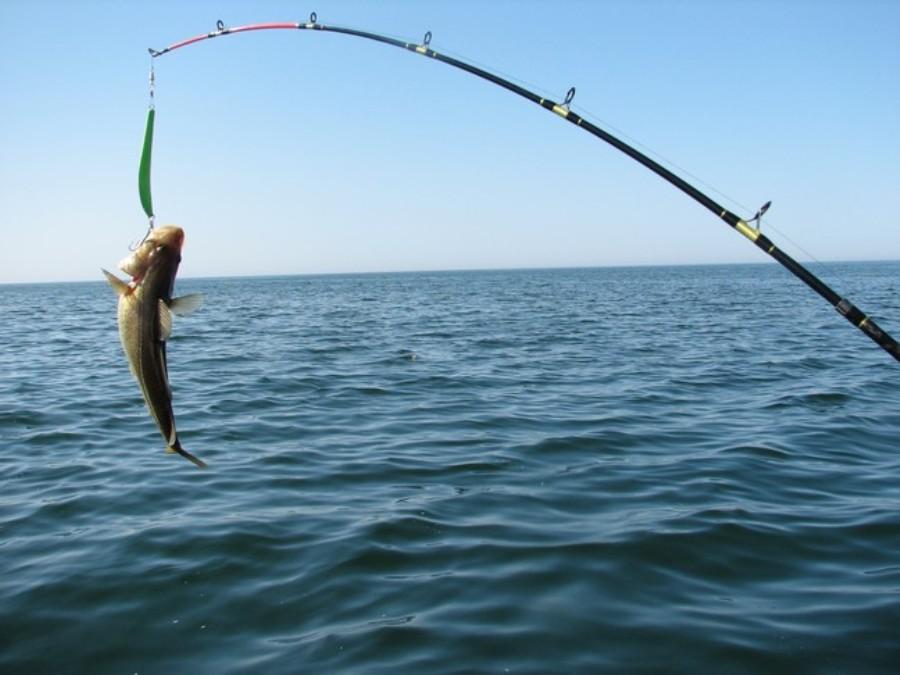 как ловить рыбу в сочи с пирса