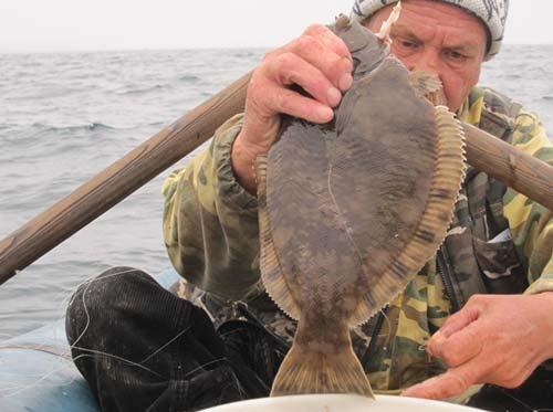 где ловят камбалу на азовском море