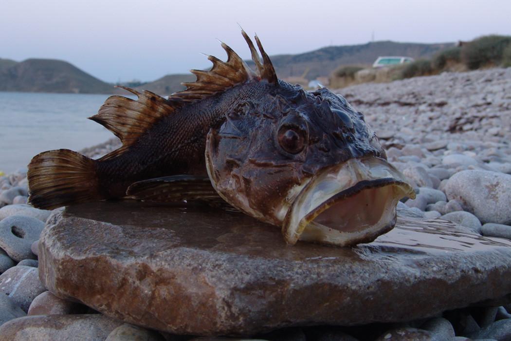 Рыбалка в Орджоникидзе - Крым.