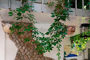 Рыбки во дворе гостевого дома Крымский кораблик на Садовой в Орджоникидзе - Крым.