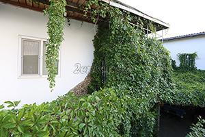Двор при входе гостевого дома Крымский кораблик на Садовой в Орджоникидзе - Крым.